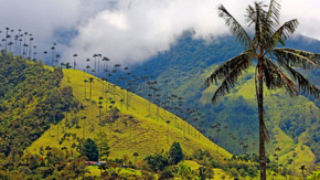 thomas cook kolumbien Valle Cocora foto thomas cook
